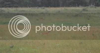 DSC_0657 cropped buck