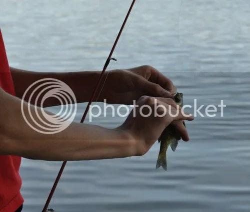 DSC_0817 c fish cropped