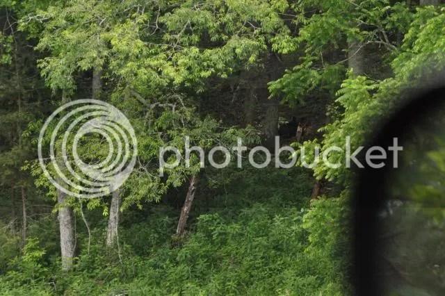 photo DSC_0807bearcropped_zps6c6d2bdb.jpg