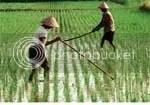 belajar dari petani