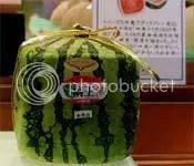 buah semangka berbentuk kubus, renungan harian
