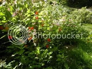 Spätsommergarten