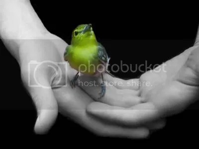 Freedom_Yellow_Bird_in_Hands.jpg image by juliaroseh