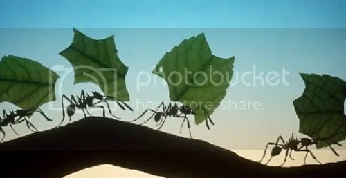 ant philosophy Pictures, Images and Photos