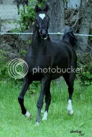 Alexis' Horse
