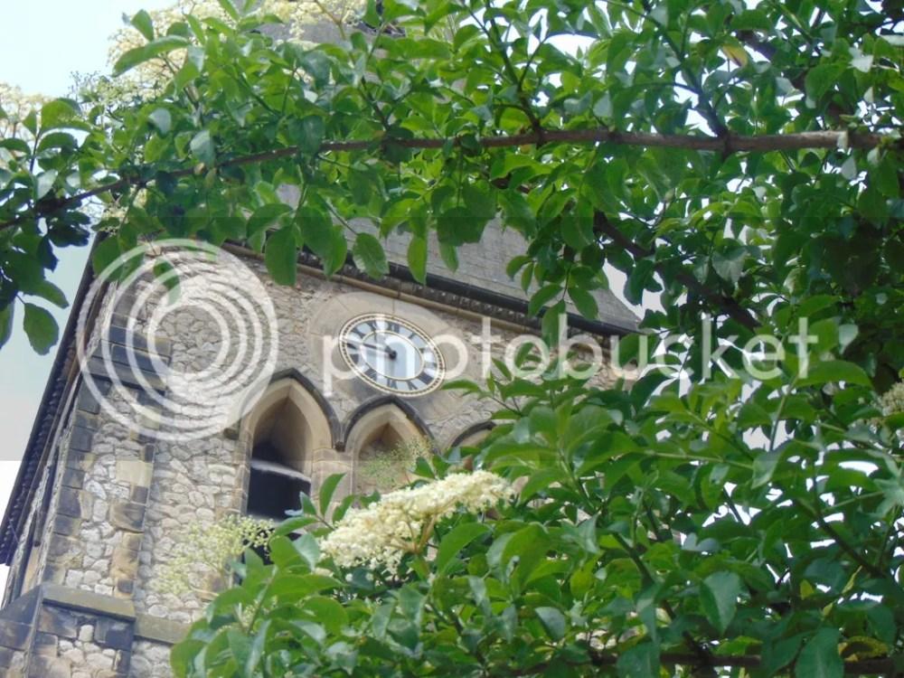 Elderflower Cordial - be quick before it is gone. (2/3)