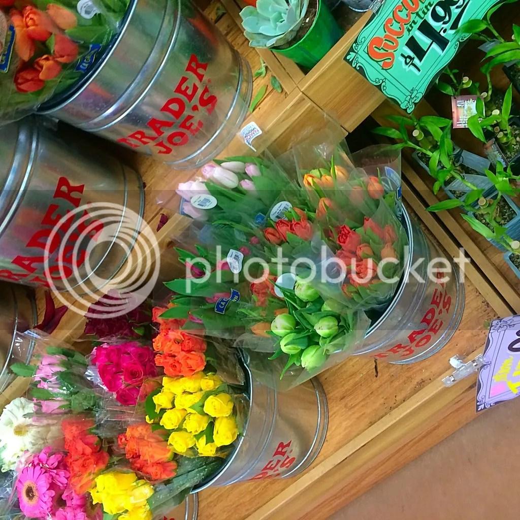 photo 2015-06-19 11.06.36-2_zpsy1g5wbin.jpg