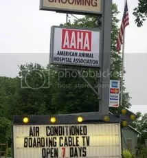 Cable TV for Cats 4