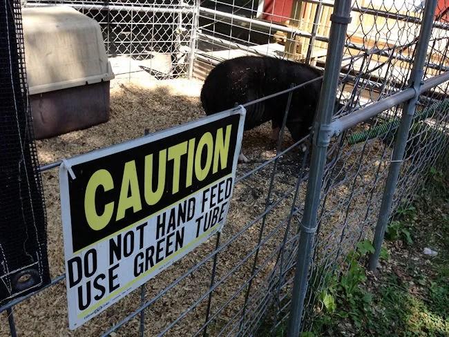 Scidmore Park Petting Zoo