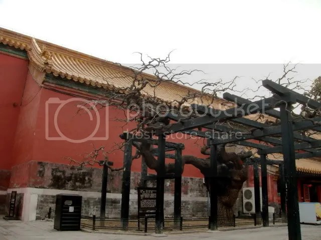 Imperial Garden, the Forbidden City