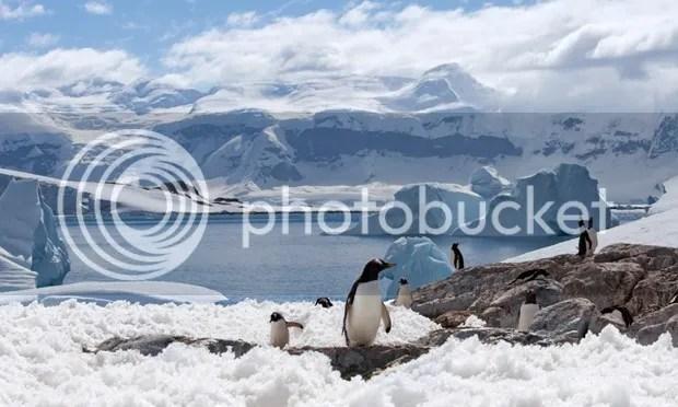 photo antarctica.jpg