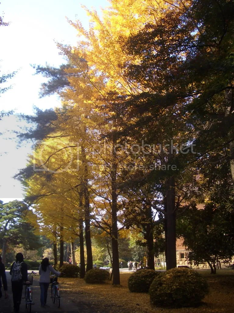 Students walk past trees in full fall foliage