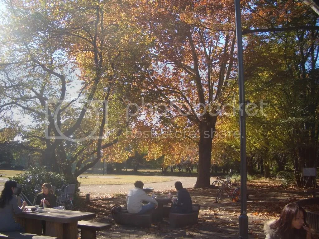 Students enjoy lunch on a beautiful autumn day
