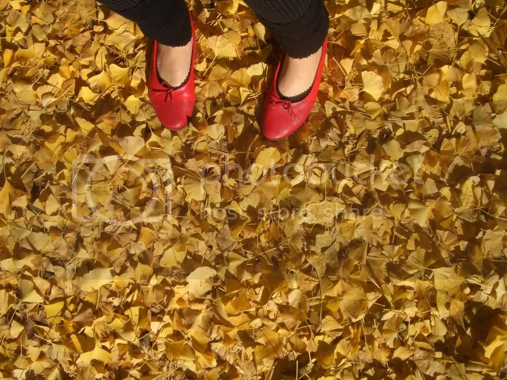 The ground covered in yellow leaves