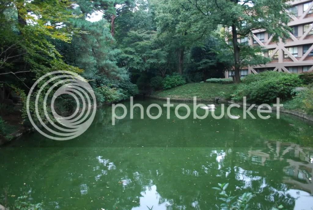 Pond on west campus