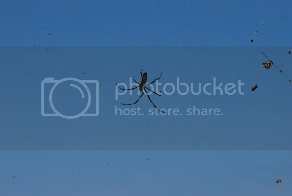 Spiderweb3
