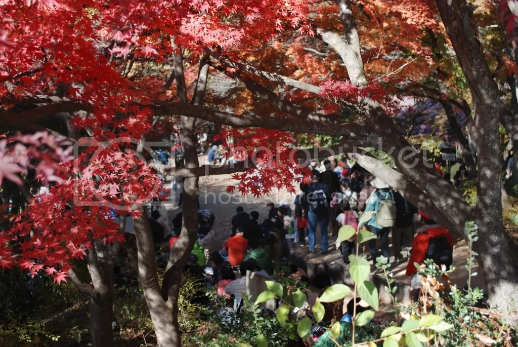 Peeking through the momiji leaves