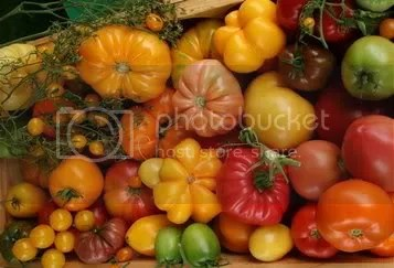 tomatoes Pictures, Images and Photos