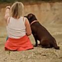 Labrador Retriever Thea