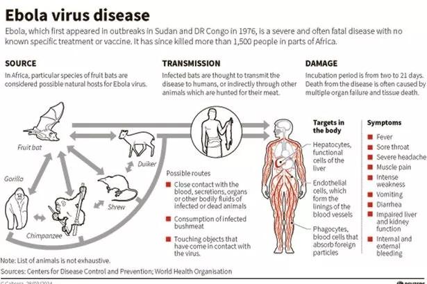 Ebola Virus Graphic
