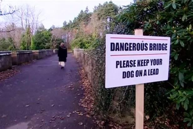 dog suicides
