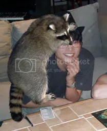 tom with a raccoon on him