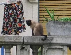 Cat on balcony of posh villa, Buda Pictures, Images and Photos