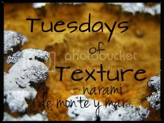 Tuesdays of Texture badge