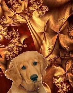 Dog03 by Cornelia Yoder