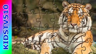Puzzle Games For Kids | The Tiger
