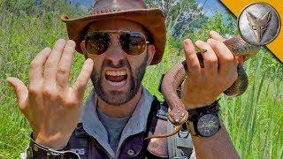 SNAKE BITE...is it Venomous?!