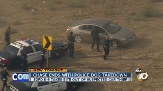 Chase ends with police dog takedown