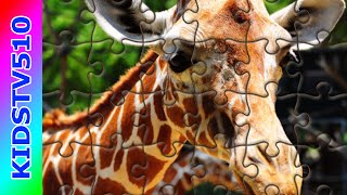 Puzzle Games For Kids | The Giraffe