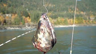 Fishing For The Biggest Fish In North America (Freshwater)