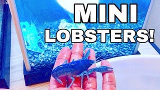 SURPRISING Catch Em All Fishing with MINI BLUE LOBSTER PET!