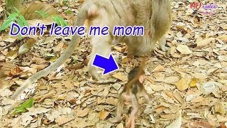 STOP..STOP MOM! Don't leave me alone | Pity poor baby Charlee try run follow mom cuz mom her leave