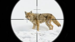 EPIC Coyote Hunting in the SNOW!!! (SCOPE CAM)