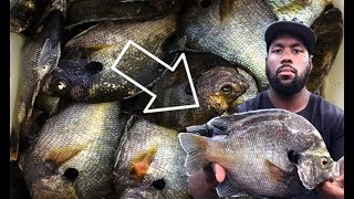 We Found Some Of The Biggest Bluegill In Texas!!!!!!!!