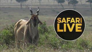 safariLIVE - Sunset Safari - August 14, 2018