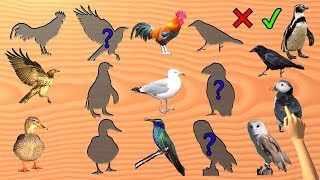 Birds Game Wrong or Right Wooden slots | Learn Bird Names | Puzzle for Kids