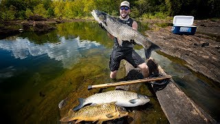 SpearFishing GIANT Carp To Feed Local Families!!! (underwater)