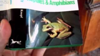 WTF is this frog on my front door ?