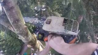 HOW TO RIGG A TREE TOP TO ITSELF, USING JUST A ROPE
