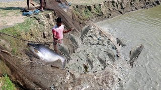 Million Of Big Fishes Jumping Out of Water   Amazing Fish Catching using a Fishing Net
