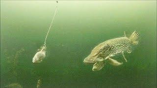Pike SLAMMED My Bait- Ice Fishing 2018