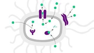 Antibiotic Resistance: How do germs resist against antibiotics?