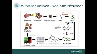 Life cell by cell: Introduction to Single Cell Expression Atlas