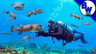 SWARMED by Porcupinefish!