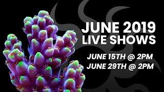 Tidal Gardens June 2019 Live Show #1