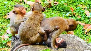 OG! What's Donny Doing Timo Baby Monkey Like This, Top Lovely Baby Monkey!